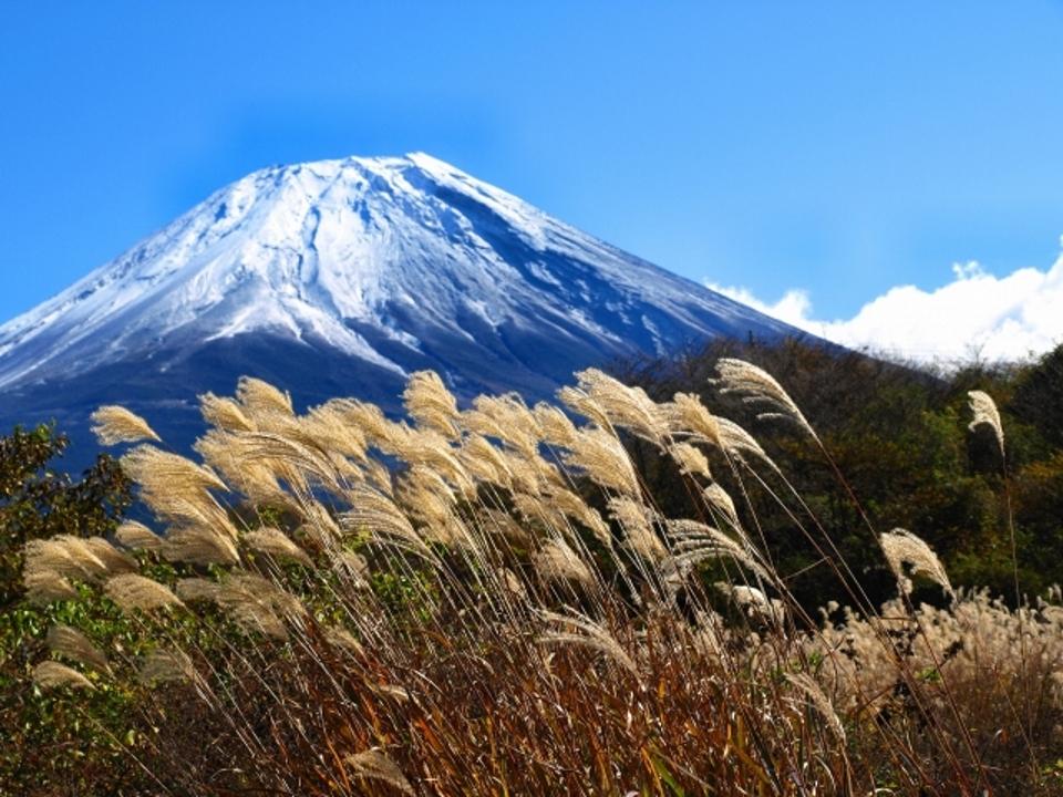 富士山すすき960x720